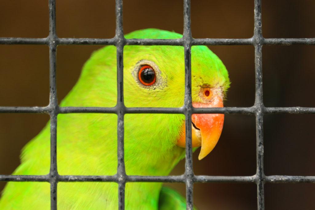 Een groene vogel in een kooi.